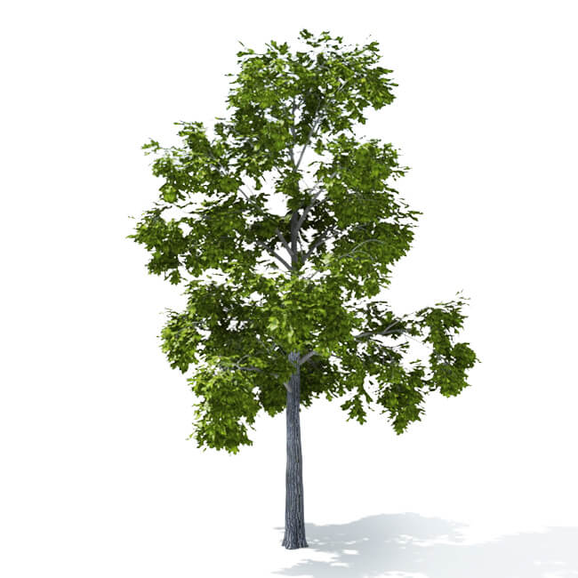 Vray proxy trees 3ds max free download | VRay 3 6 for