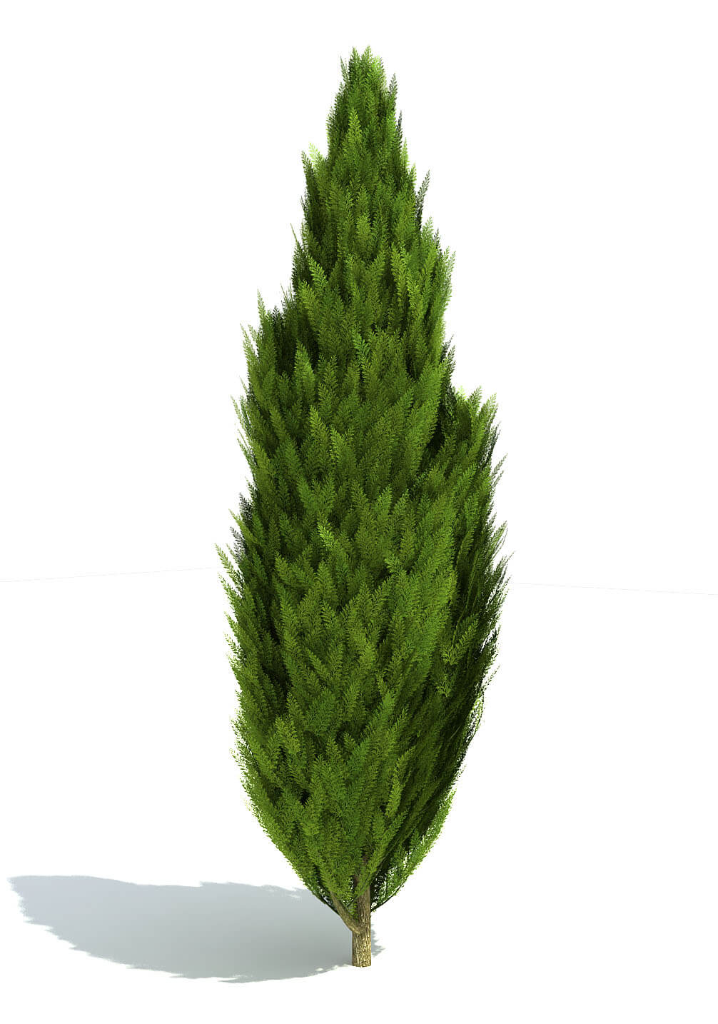 Free Plant Models For Growfx 3ds Max Models Kstudio