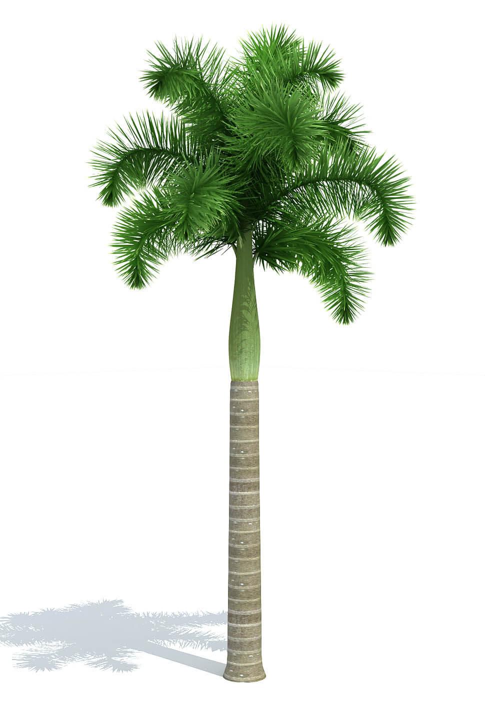 Free plant models for GrowFX - 3ds Max Models | Kstudio