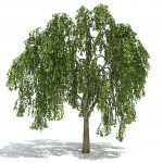 WillowTree_1