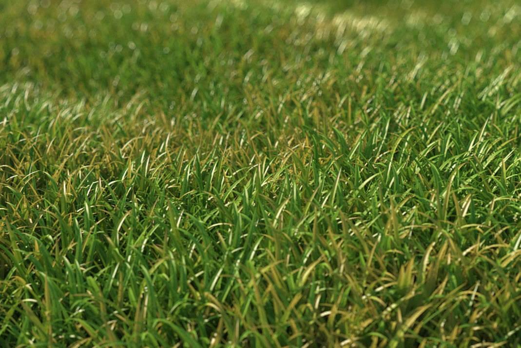 torrent hq grass