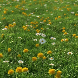 HQ Grass 1 - collection of realistic 3d models of flowers and grass