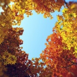 Hd Trees 4 - summer and autumn broadleaf plants